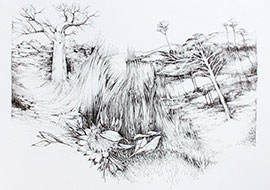 home of the protea drawing janet botes
