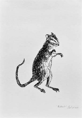 rodent drawing veronica lamb