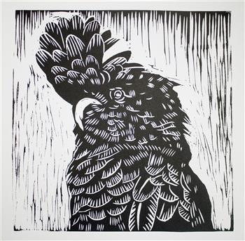 black cockatoo limited edition print matthew broughton