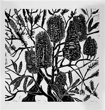 banksia and tea tree limited edition print matthew broughton