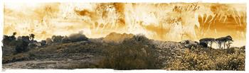 remembering nature  ed.1/5 limited edition print janet botes
